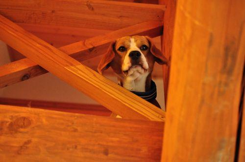 お2階から覗くグー