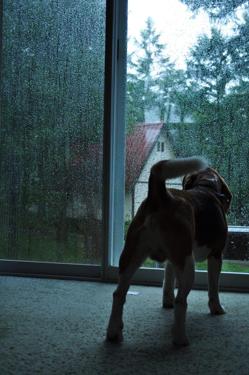 おはようございます。雨です